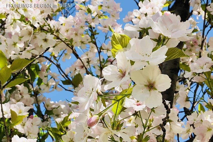 Frühlingsbeginn_in_Wien