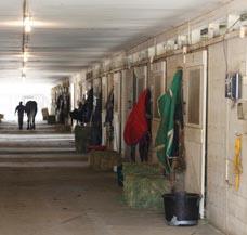 beheizen Pferdesolarium Tierhaltung Melkstand
