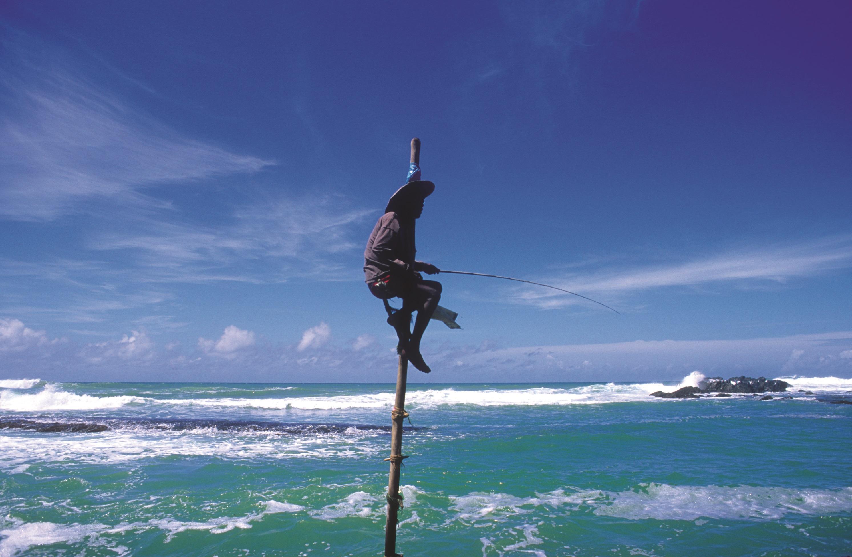 Sri Lanka Stockfischer