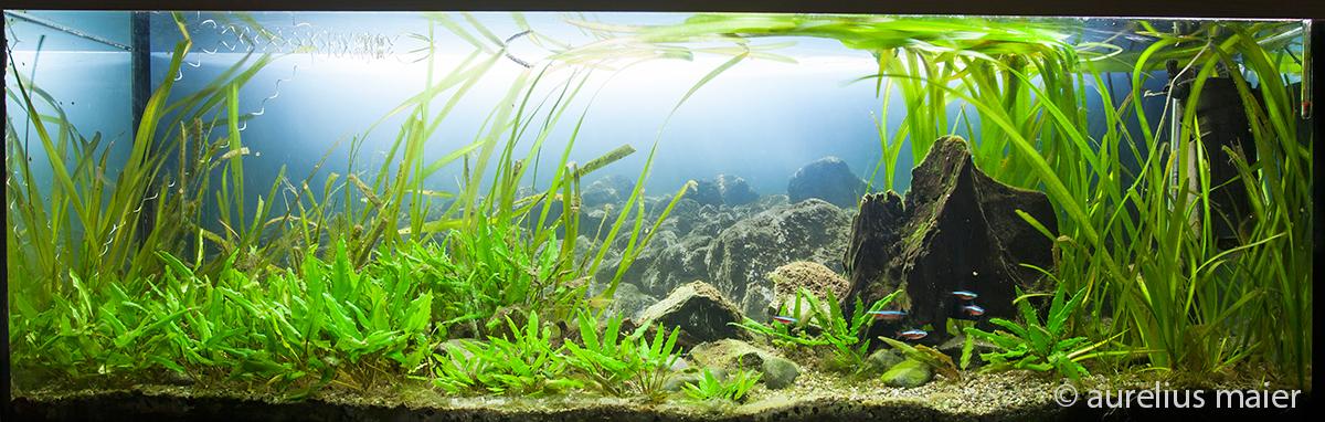aquarienhintergrund aquaspace aquarium hintergrund