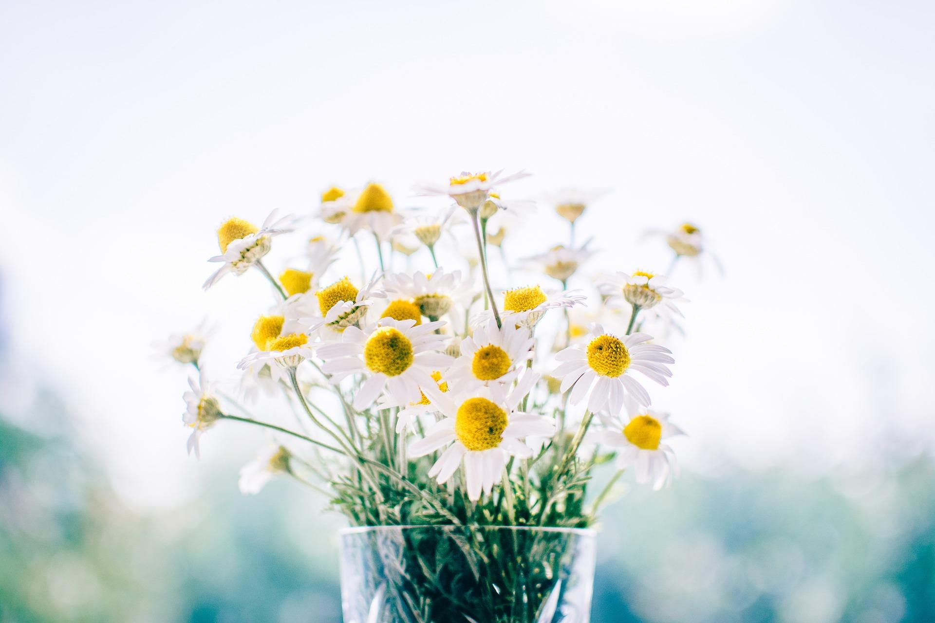 flowers-983897_1920jpg